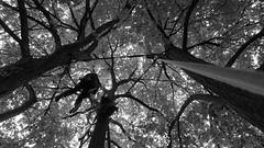 Triangle (arborist.ch) Tags: tree baum treeclimbing arborist treecare baumpflege arboriculture