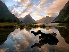 More Milford Magic (Panorama Paul) Tags: sunset newzealand reflections log milfordsound fiordland nikkorlenses nikfilters nikond800 wwwpaulbruinscoza paulbruinsphotography