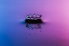 Neptune is rising........ (The Mad Macrographer) Tags: waterdrops crown bicolor purple blue splash reflection refraction indoors tabletopphotography studio peterborough uk nikkvalentine