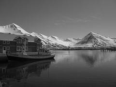 IMG_6635 (NapoleonIsNotDead) Tags: ocean wild summer fish snow mountains west nature landscape harbor blackwhite iceland seaside fishing village north islanda siglufjrur boath