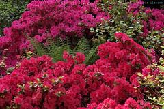 L1008722 (LaBonVampire) Tags: leica flowers nature zeiss carlzeiss zm leicam8 teletessart485 teletessar85