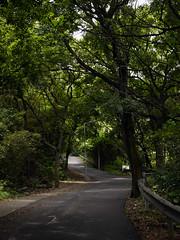 青山散步 (Steve only) Tags: trees lumix hiking g snap panasonic vario m43 f3556 行山 dmcg1 1232mm 12323556