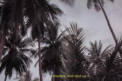 """J163/365  """"Breathe, and shut up"""" (manon.ternes) Tags: paris photos photography photographie btsphoto projet365 personne projet pink parisienne project potique 365project 365days 365 tudiante student love trees palmiers arbre sun vacances holidays thalande tha paysage landscape"""