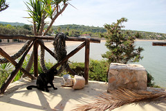 Apulien (andreasdietrich477) Tags: italien sea sky italy sun beach strand cat landscape eos meer wasser mare view outdoor katze aussicht landschaft sonne apulia peschici apulien 550d fokussiert hohequalitt hohequalitt