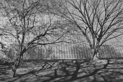 NYC 2016 film_039 (c a r a p i e s) Tags: carapies cityscapes 2016 nikonf100 35mm film pelicula analogico kodak kodaktrix trix bw blackwhite blancoynegro america usa eeuu newyork newyorkcity metropolitanmuseum newurbanspaces architecture arquitectura fotografiaurbana urbanphotography urban urbanidad urbvanidad urbvanity urbanphoto streetphoto streetphotography streetlife