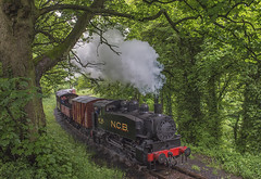 TANFIELD GALA DAY 2 (dave hewitt63) Tags: railway steam gala tanfield
