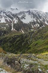 16-palu (Davide Podetti) Tags: parco val di dello pian peio stelvio pal valdisole