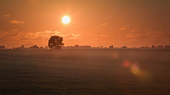 the early bird catches the worm (# 18 - 14.06.2016) (PixTuner) Tags: bremerhaven pixtuner fog nebel sunset sunrise sonnenuntergang natur nature tree feld field rasen warm