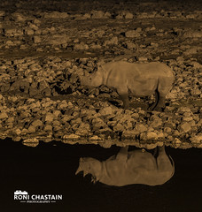 Namibia_060516_0980 (Roni Chastain Photography) Tags: namibia etosha park wildlfe animals africa safari etoshapark