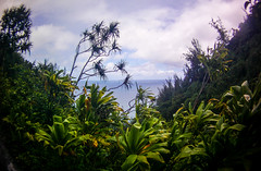 Pacific through the jungle (mediageek) Tags: hawaii kauai 2016 kalalautrail actioncamera ellenknutson swannfreestylehd