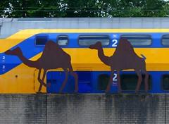 Camel Train - 2 July 2016 (John Oram) Tags: ns camels nederlandsespoorwegen amsterdamamstel 2002p1110337e