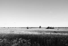 "land (Vadim Beldiy) Tags: вадимбельдий vadimbeldy ukraine nature nikon1v1 nikonv1 nikonone nikon1 nikon 1nikkor10mmf28 nikkor10mmf28 blackwhite blackandwhite black white monochrome landscape landscapesdreams landscapesworld field flowers flower sky skyline saariysqualitypictures ""nikonflickraward"" kievregion kyivoblast novyyepetrovtsy petrovtsy novipetrivci petrivci новіпетрівці новыепетровцы"