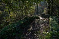 El camino de la luz (SantiMB.Photos) Tags: 2blogger 2tumblr 2ig camino way path bosque forest humedad humidity luz light puente bridge baztn navarra otoo vacaciones2015 arantza espaa esp