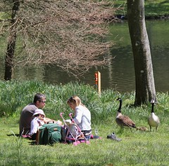 Stourhead - Family Picnic with unexpected visitors. (stepheneverettuk) Tags: uk trees england lake southwest gardens canon reflections picnic unitedkingdom lakes stourhead canadiangeese wiltshire mere efs1785mmf456isusm stourton 60d