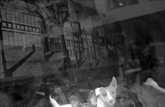 Curious Reflection (brian_bernas) Tags: reflection film philadelphia dogs glass buildings blackwhite pennsylvania trix