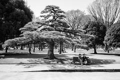 Tokyo Imperial Palace Gardens - in the shade (fabiolug) Tags: park street leica trees light shadow people blackandwhite bw tree monochrome japan gardens 35mm bench japanese tokyo blackwhite women asia sitting shadows streetphotography rangefinder summicron shade monochrom biancoenero imperialgardens leica35mm leicam tokyoimperialpalace 35mmsummicronasph leicasummicron summicron35mmf2asph 35mmf2summicronasph summicronm35mmf2asph tokyoimperialpalacegardens mmonochrom leicammonochrom leicamonochrom