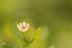 La parabole (photosenvrac) Tags: macro nature fleur photo bokeh thierryduchamp