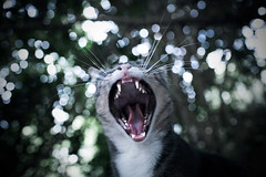 (dirtyharrry) Tags: animal cat 35mm canon dirty creta crete dirtyharry noawards nologos 5dmkii dirtyharrry nobanners kydonakis