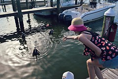 Pelicans are definitely my favorite birds (Olive Warbler) Tags: ocean life sea summer vacation fish beach pelicans gulfofmexico birds animals bay boat fishing alabama boating gulfshores redsnapper fortmorgan