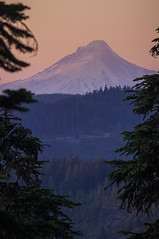 Mt. Hood from Triangulation Peak (Thomas Shahan 3) Tags: trees summer mountain snow oregon forest outdoors volcano woods pacific hiking trail cascades pacificnorthwest wilderness peaks stratovolcanoes