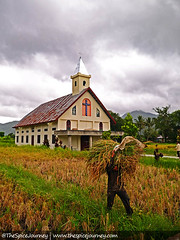 Menjunjung Padi (The Spice Journey) Tags: ulos sumatrautara tarutung tapanuliutara thespicejourney colorfulindonesia