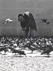 19, Rue du Beaubourg, Paris (bellimarco) Tags: paris france bird rue francia beaubourg clochard parigi piccioni