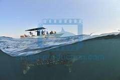 2013 06 ESK DJIBOUTI 4762
