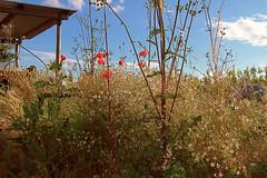 Memories of spring (KittyTheWild) Tags: emilia ef 1635 medolla