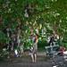 suttetræet
