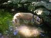 7-22-2012ArnoldArboretum027