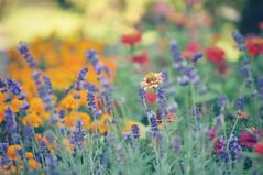 my garden EXPLORE (la cegna) Tags: