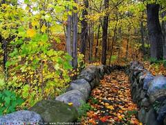 Nature (Hisham Alqawsi) Tags: nature صور الطبيعة