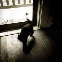 Le Chat Noir (liquidnight) Tags: camera shadow blackandwhite bw cats pets motion max monochrome beauty animals silhouette turn blackcat dark portland movement blurry feline spirit ghost dream kittens doorway mainecoon mysterious pdx dreamy felines elusive phantom katzen iphone lechatnoir iphone5 iphoneography uploaded:by=flickrmobile flickriosapp:filter=nofilter
