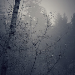 (Rachel Leah Sampson) Tags: trees nature fog forest soft dream explore ethereal delicate explored