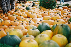Halloween flavors. (Hello i'm Wild !) Tags: autumn orange fall film halloween analog 35mm october holidays pumpkins amusementpark canonae1 funfair europapark fujisuperia400iso