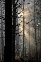 Lifting Fog at Stanley Park-8379 (Geoffrey Shuen Photography) Tags: trees fog stanleypark