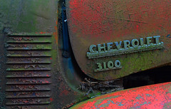 Chevrolet 3100 (davidwilliamreed) Tags: old abandoned metal truck emblem rust decay grunge neglected rusty pickup forgotten weathered peelingpaint crusty patina