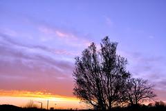 Sunset (oharran) Tags: sunset sky tree silhouette garden denmark backyard day cloudy colourful partly colrful kalundborg vision:mountain=0737 vision:sunset=0655 vision:clouds=0684 vision:outdoor=0978 vision:sky=0899