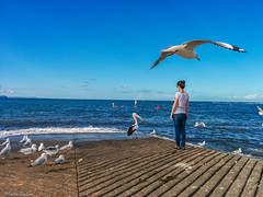 Circle of Trust (maximpa) Tags: blue sea sky white seascape beach girl birds clouds one waves australia pelican nsw nocrop daydream hdr dreamscape everydaythings lightroom candidphotography mobilography singleshot mobilephotography nexus5