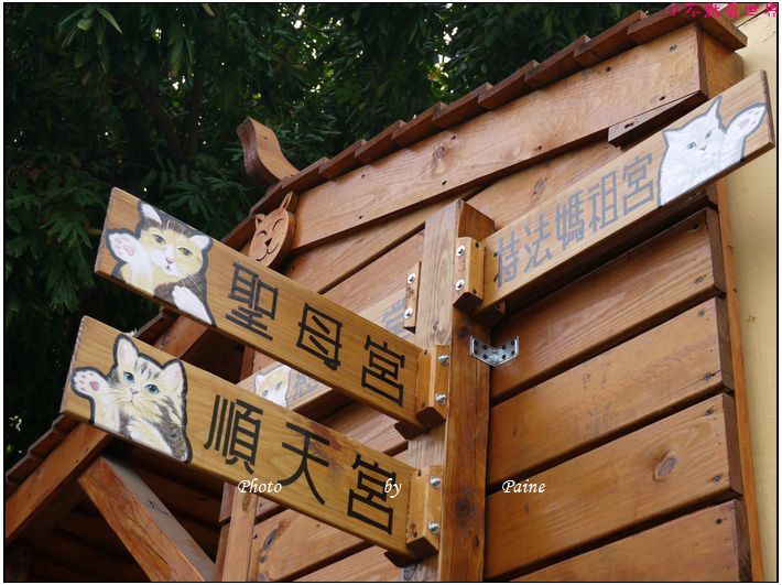 雲林虎尾屋頂上的貓 (12).JPG