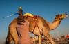 Deserts and Camels 131107 16_54_46 (Renzo Ottaviano) Tags: race al dubai desert united racing course emirates camel arab lorenzo races camels corrida emirate deserts uniti renzo unis arabi carrera corsa emirati unidos camellos chameaux árabes kamelrennen صحراء سباق arabes ottaviano camelos emiratos emirados vereinigte arabische cammelli emiratiarabiuniti émirats الهجن هجن سباقات المرموم marmoun