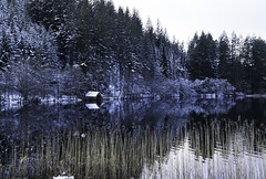 winter reflections (midge 1971) Tags: trees winter snow water reflections reeds scotland sony loch alpha boathouse trossachs lochard