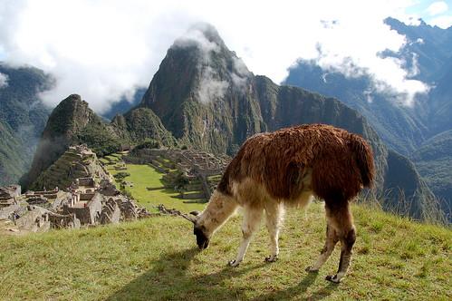 "Peru - Machu Picchu - słynne ujęcie z lamą <a style=""margin-left:10px; font-size:0.8em;"" href=""http://www.flickr.com/photos/125852101@N02/15921065993/"" target=""_blank"">@flickr</a>"