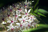 Pineapple Lily (crafty1tutu (Ann)) Tags: flower macro garden inmyneighboursgarden pineapplelily pretty lily crafty1tutu canon180mm35lseriesmacrolens gettycontributor anncameron qualitypixels ilovemypics flickrsfantasticflowers naturescarousel naturethroughthelens itsallaboutflowers