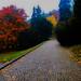 Colourful Path - Praha