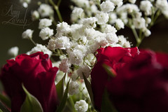 Valentines 2015 (Amy Zarah) Tags: flowers red roses flower colour rose photography amy deep zarah