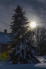 Heavy (tenacious8) Tags: snow tree nature snowstorm