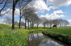 Spring (daaynos) Tags: trees sky clouds reflections landscape spring lente rapeseed koolzaad hoeksewaard