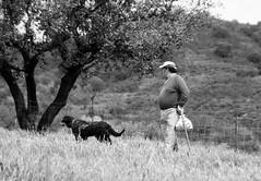 The Team (derNubo) Tags: blackandwhite tree portugal monochrome blackwhite europe shepherd sheepdog algarve alsatian stockman sheepherder schwarzweis
