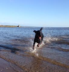 Gunner (Dls Bute) Tags: dog sun beach water doberman gunner dobie dobermann